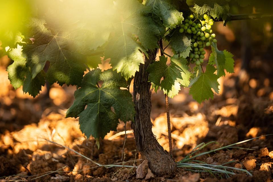 Domaine de la Fouquette - Vins Biologiques - Côtes de Provence