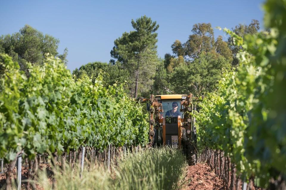 Domaine de la Fouquette - Vins Biologiques - Var