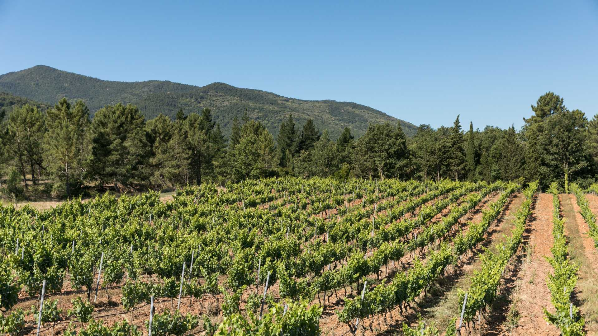 Domaine de la Fouquette - Vins Biologiques - notre terroir